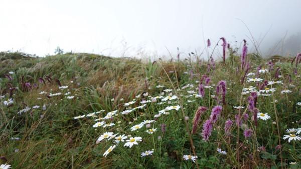 세석평원의 들풀과 들꽃들 2013년 09월 01일