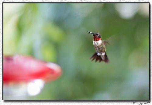 ©jcaputo4 (Flickr)