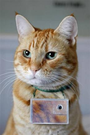고양이 사진작가 쿠퍼 씨.