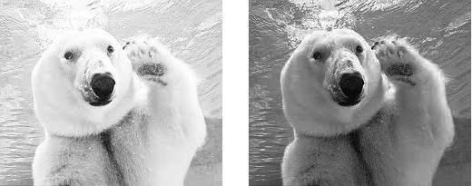 """아니! 젠장!! 나의 폴라베어를 돌려줘. 목욕 안 한 북극곰이 되었습니다. 칙칙해 죽겠네요. 하지만 카메라는 이제야 가슴털이 한올 한올 보인다며 좋아라 합니다. """"중요한 건 가슴털이라구!"""""""