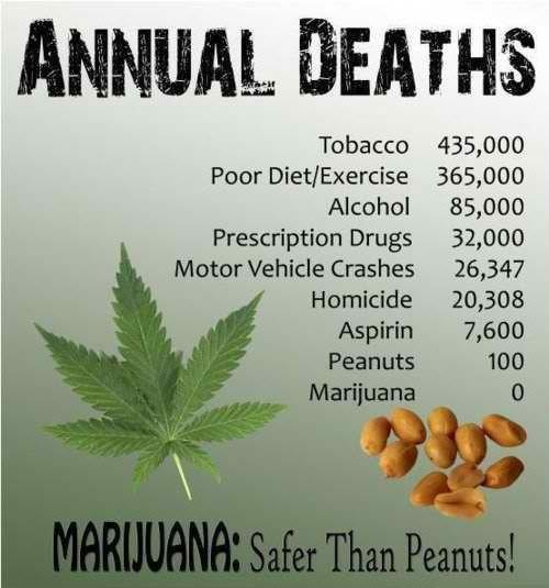 심지어 대마초가 땅콩보다도 안전하다는 주장도 있다.