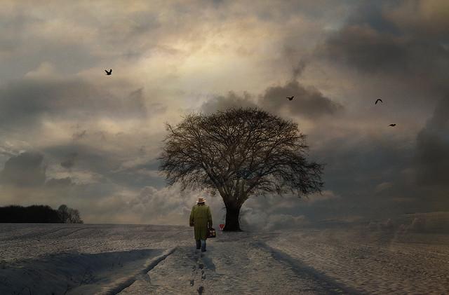 나무 사내 삶