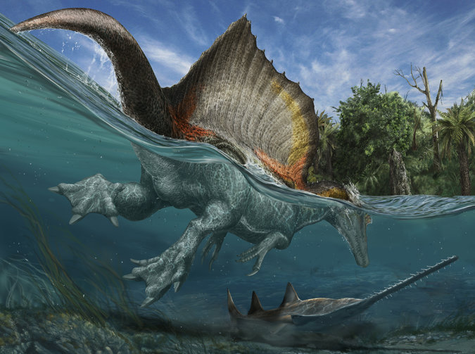 http://www.nytimes.com/2014/09/12/science/a-nomads-find-helps-solve-the-mystery-of-the-spinosaurus.html 다비데 보나도나의 그림.