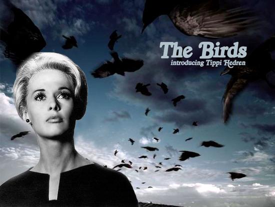 새(The Birds, 알프레드 히치콕, 1963)