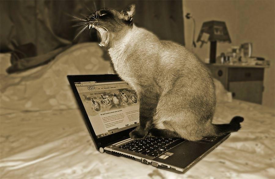 고양이와 노트북