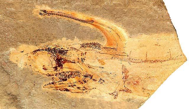다모클레스 세라투스(Damocles serratus) (리처드 룬드, 1986년)