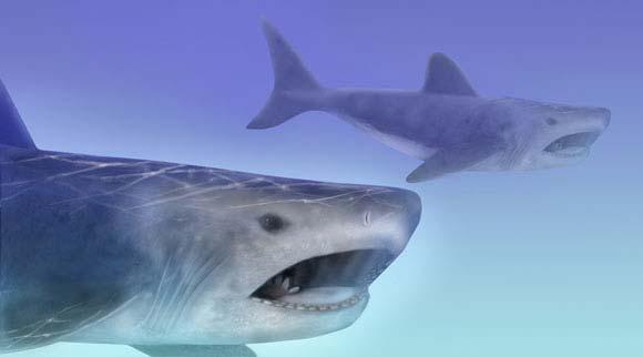 로버트 퍼디와 메리 패리쉬의 복원도. 혀가 있어야 할 부분에 소용돌이 이빨이 있다. (출처: 스미스소니언 미술관)