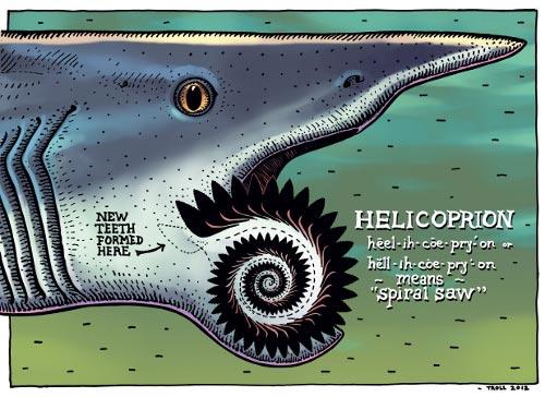 헬리코프리온 아래턱과 소용돌이 이빨의 구조. (©레이 트롤, 출처: 내셔널지오그래픽)