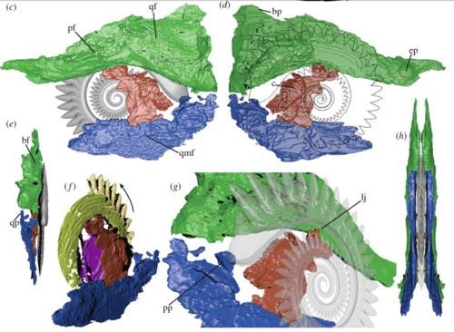 CT 스캔으로 얻은 3차원 영상을 여러 각도에서 본 것 (Tapanila et al., 2013)