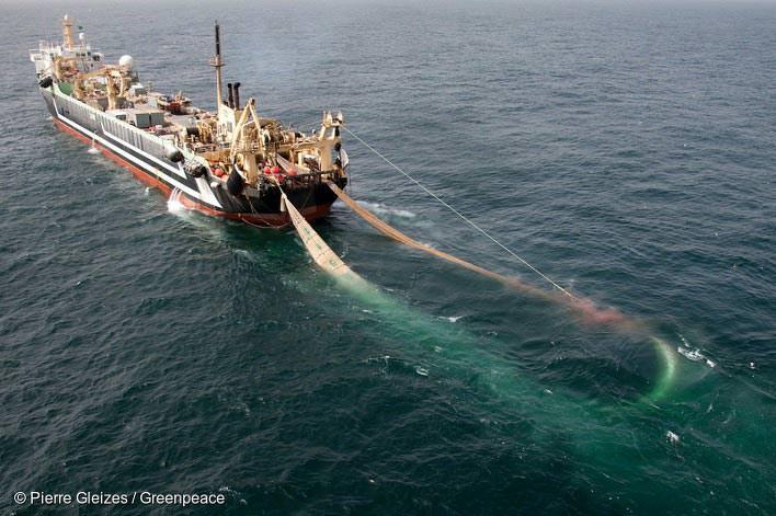트롤선(trawler)들의 조업 모습
