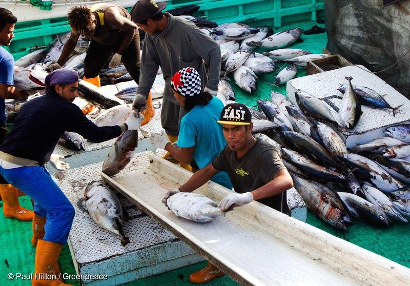미국령 서사모아에서 알바코어 다랑어를 하역하고 있는 선원들의 모습
