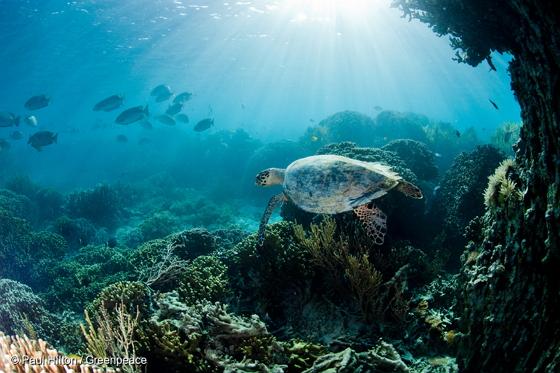 우리가 함께 지켜야할 아름다운 바다
