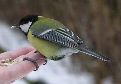 박새는 아주 작은 새.