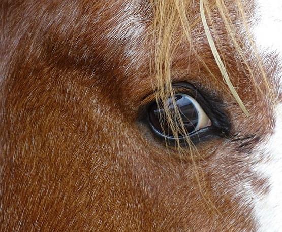 말 동물 가축