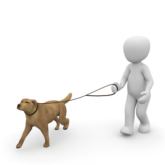 공공장소라면 개에게 목줄을 채우고, 충분한 주의를 기울였는지가 그 책임 여부 판단에서 중요하다.