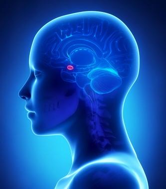 전두엽이 이성(긍정적인 정서)에 관여한는 반면, 편도체(붉은 색)는 감정(부정적 정서)에 관여한다. (출처: cofa.org.ar) http://www.cofa.org.ar/?p=24435
