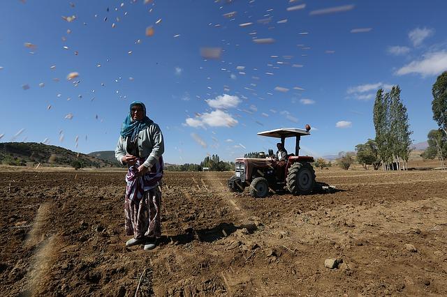 터키 여자 할머니 농부 농촌
