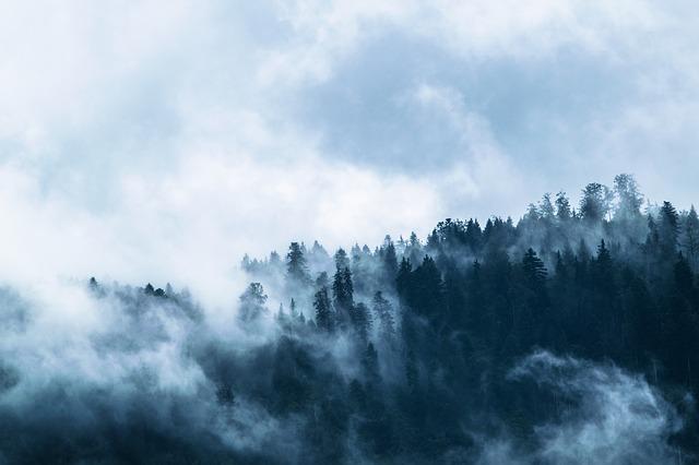 갓 태어난 숲은 다시 탄소를 빨아들인다