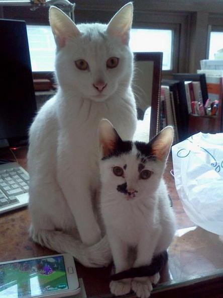 결국 '가출'에 성공한 고양이 도도(왼쪽). 지금은 오른쪽 고양이와 살고 있다.