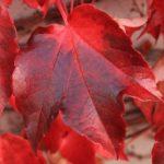 leaves-3809609_640