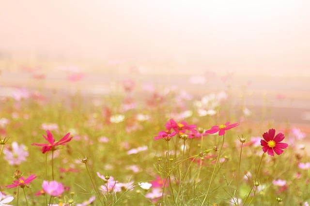제주 평화 꽃