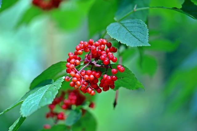 빨간 열매