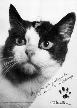 1963년 10월 18일 우주로 올라간 고양이 펠리세트. 사진은 펠리세트를 모델로 한 우편엽서 (출처: 위키미디어 공용) https://en.wikipedia.org/wiki/F%C3%A9licette#/media/File:Felicette,_spacecat.jpg