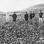남북전쟁의 나비효과: 조선은 어떻게 일본의 면화기지가 되었나