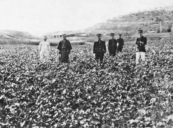 1912년 촬영된 일본 제국 관료와 조선의 면화재배인