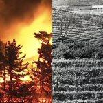 천 년 원시림을 불태우는 거대 화전(火田)의 불길